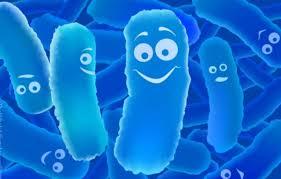 men vi sinh là lợi khuẩn tốt cho đường ruột
