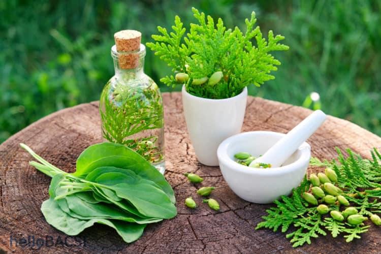 Bài thuốc nam trị sa trực tràng từ cây thuốc hiệu quả
